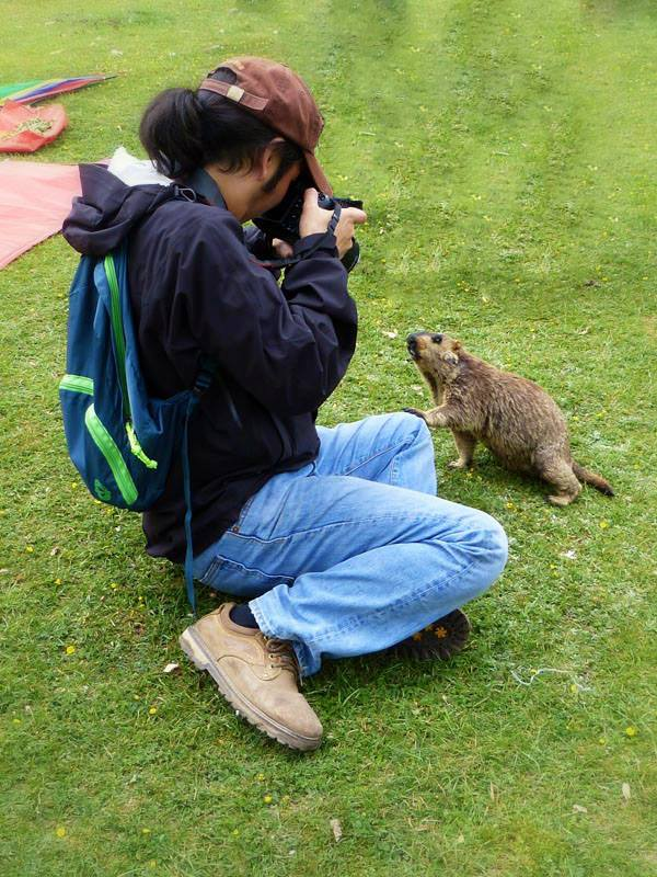 Wangden, the owner of Snowlion tours, had a friendly meeting with a Himalayan Marmot during a eco tourism activity in Tibet