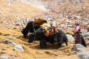 Yaks and butter tea trek