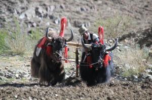 Lhasa Yandrok See 012