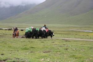 Qinghai himalaya-travel.com NyepoYurtse120620 193