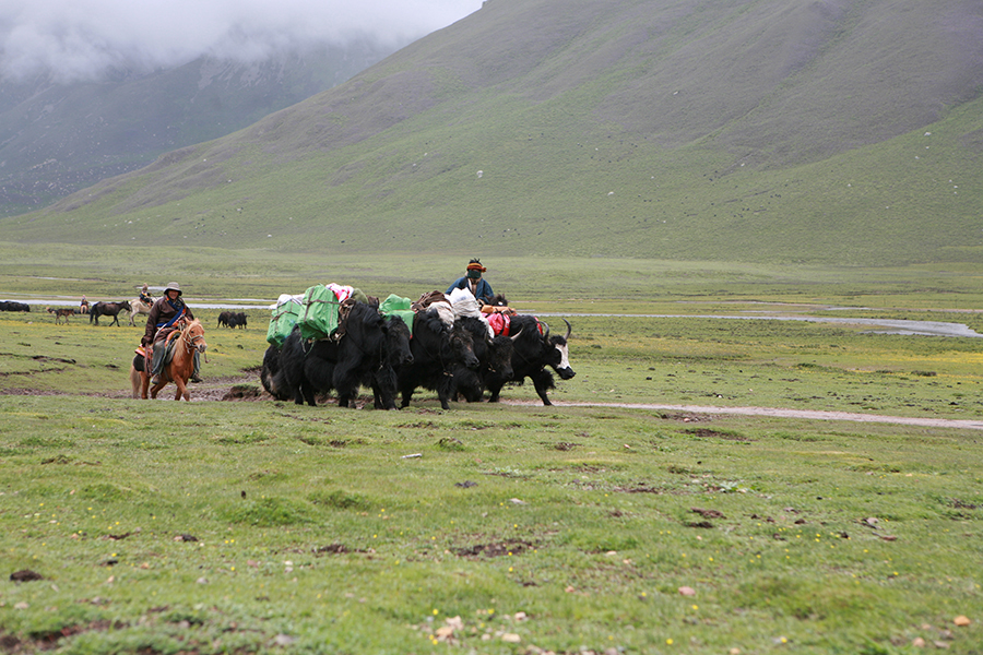 Yak caravavan during Trekking of Mt. Nyepo Yurtse in Amdo-Tibet