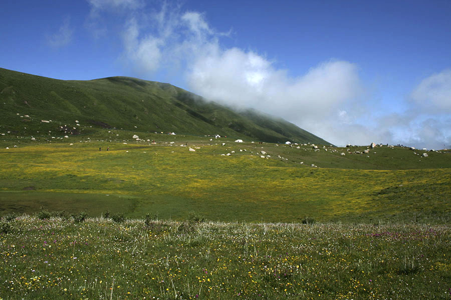 Grassland carpeted with wild flowers during summer time in Golok